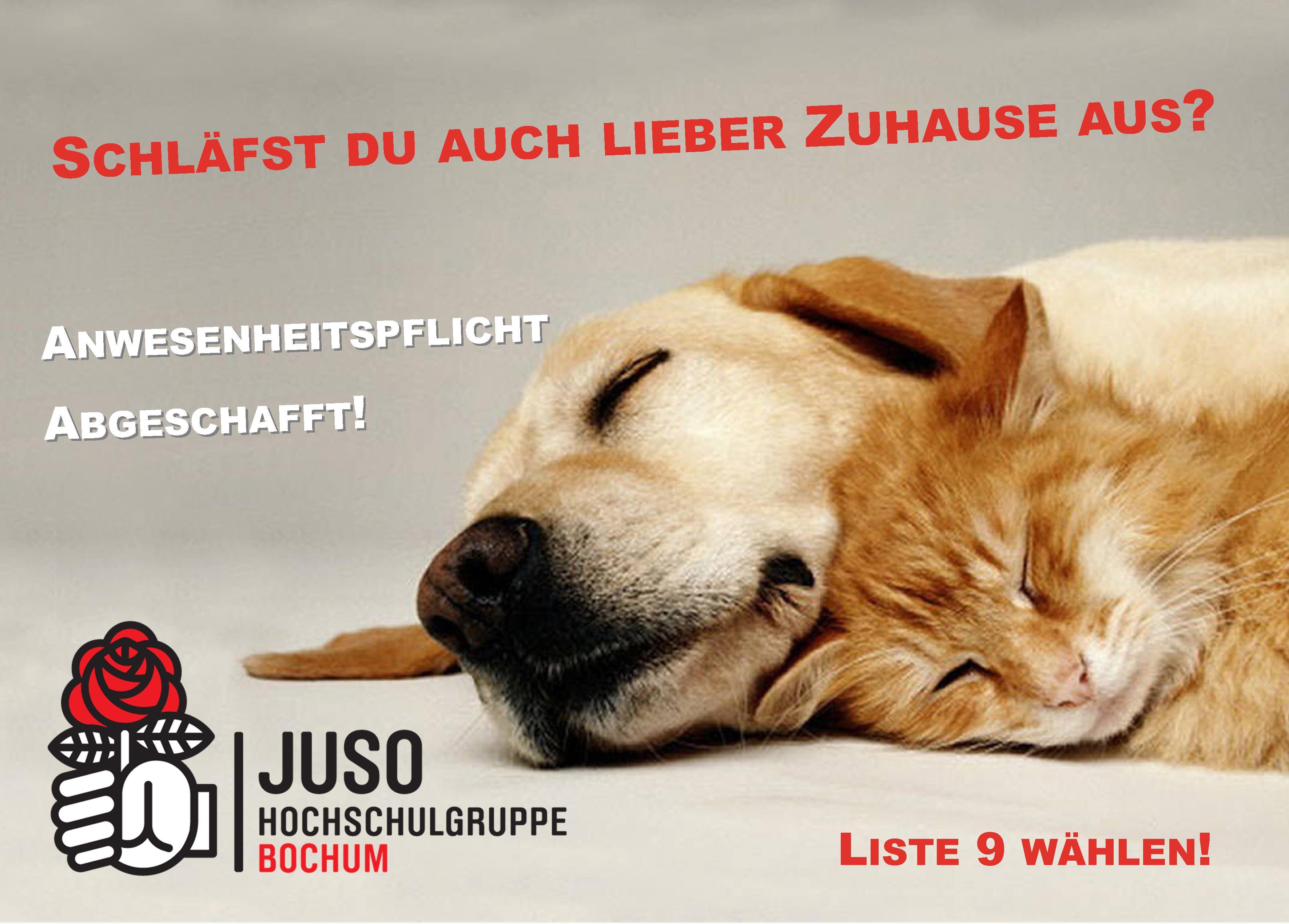 Plakat Hund Katze Anwesenheitspflicht